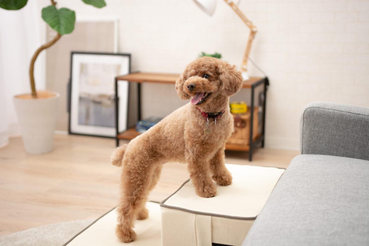 動物病院 院長が選ぶ『犬用の階段おすすめ5選』に選出